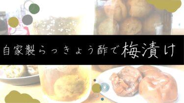 【長期保存】自家製らっきょう酢で梅漬けの作り方/レシピ
